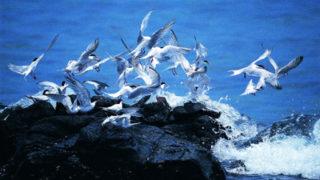 菊島海鳥天堂