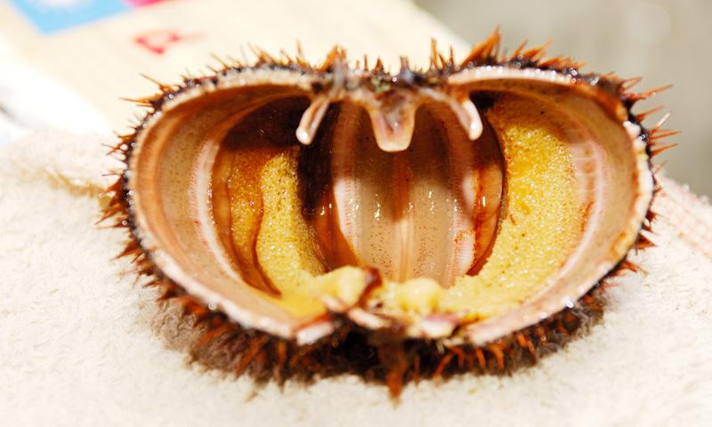 澎湖馬糞海膽